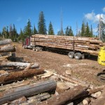 About Our Logs Log Home Outlet