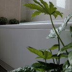 Create Your Statement Home How Green Plants Can Used