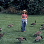 Fly Away Home Trailers Reviews Synopsis Showtimes And Cast