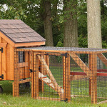 Frame Chicken Coops Eberly Barns
