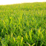 Green Grass Home Addgrainonearth