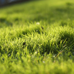 Green Grass Home Flickr Sharing
