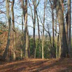 Greer Other Subdivision Land For Sale
