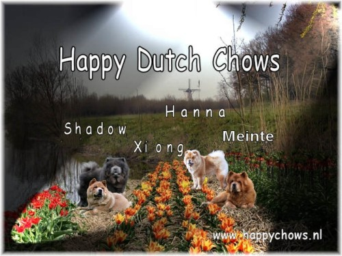 Happy Dutch Chows Homepage Click Enter