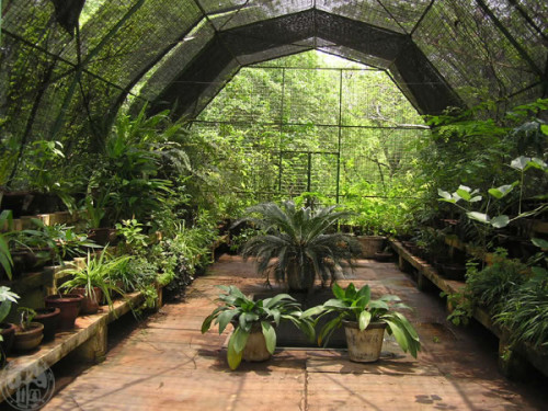 How Build Greenhouse Outdoortheme