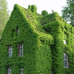Green Home Vertical Garden