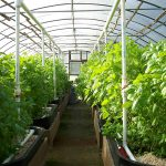 Green Top Market Plans Build Greenhouse Premises